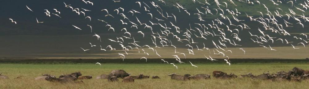 Global Mammal Assessment programme