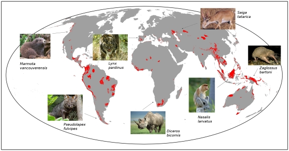 Global priority areas for mammal extinction risk reduction